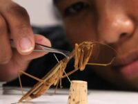 Things to consider before you hire a pest control service
